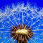 Tos seca y otros síntomas de alergia