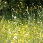 Síntomas de la alergia primaveral - HeelEspaña