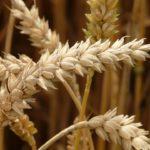 Celiaquía - qué debes saber - HeelProbiotics - HeelEspaña