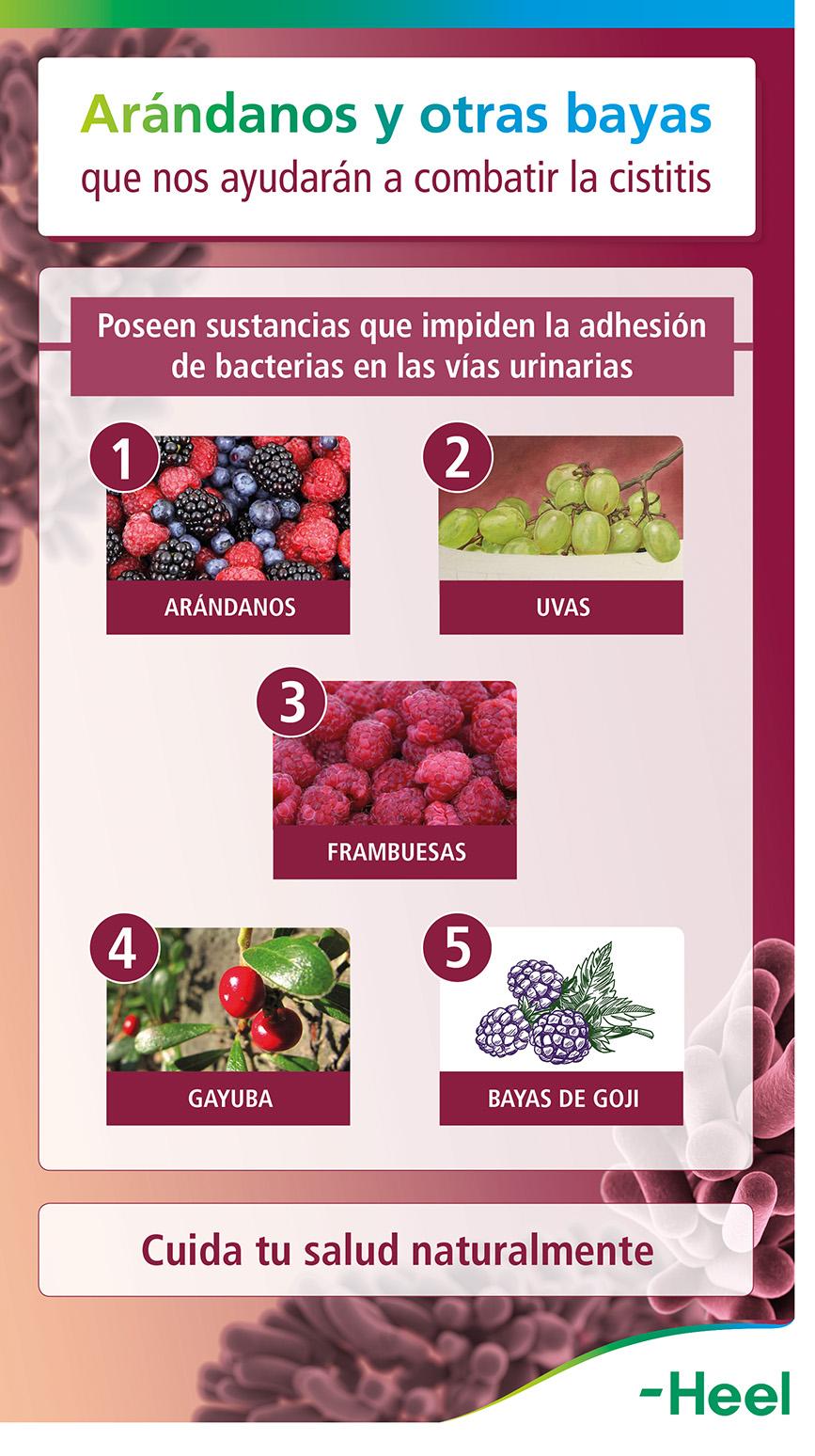 Arándanos rojos y otras bayas para prevenir la cistitis - HeelProbiotics - HeelEspaña