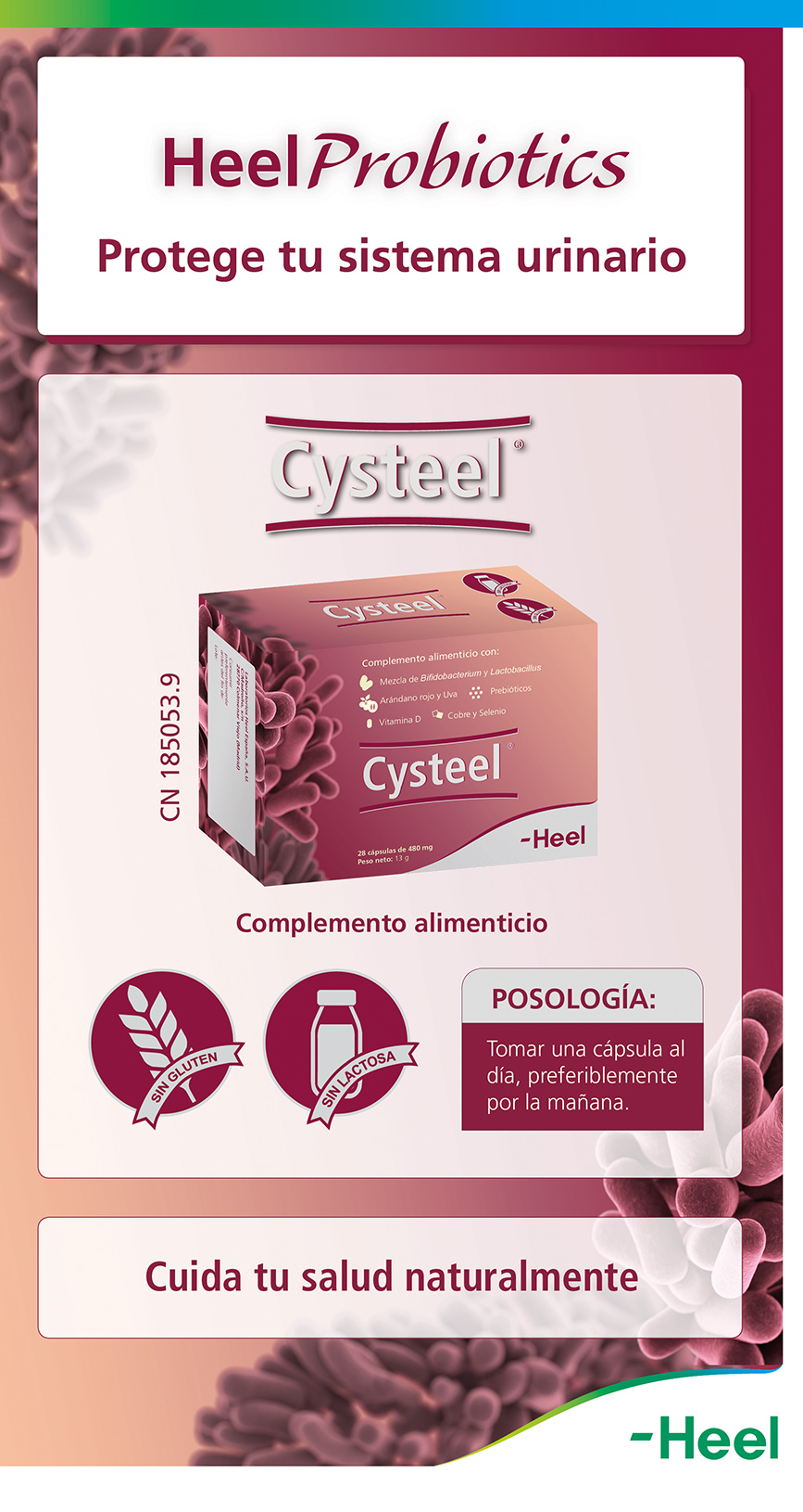 Probióticos - infección de orina - HeelProbiotics - HeelEspaña