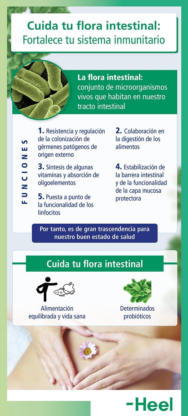 Importancia de cuidar la flora intestinal - HeelProbiotics - HeelEspaña