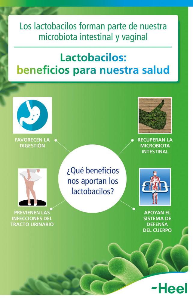 ¿Qué beneficios nos aportan los lactobacilos? - HeelProbiotics - HeelEspaña