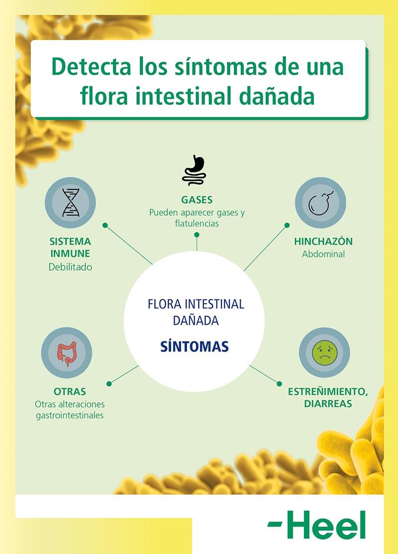 flora intestinal dañada