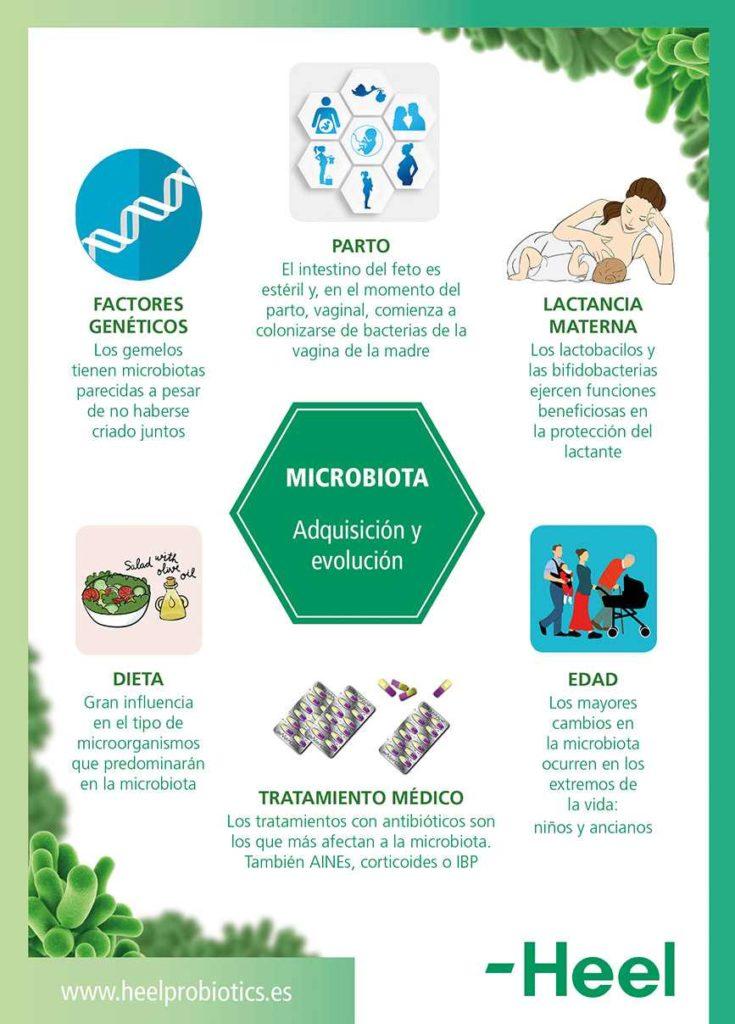 ¿Cómo se forma la microbiota?: formacion microbiota heelprobiotics heelespana 735x1024 - HeelEspaña