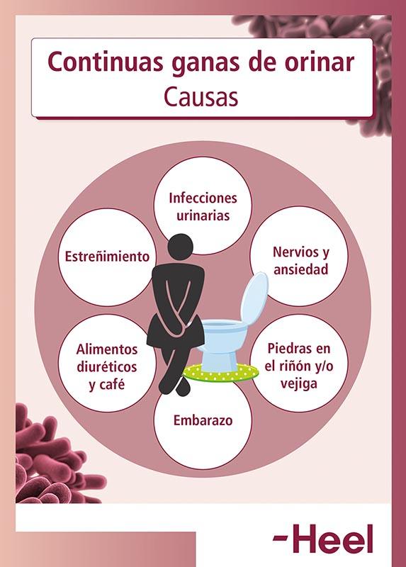 Ganas de orinar constantemente: Causas - HeelProbiotics - HeelEspaña