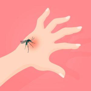 Picaduras de mosquitos: cómo evitarlas - HeelEspaña