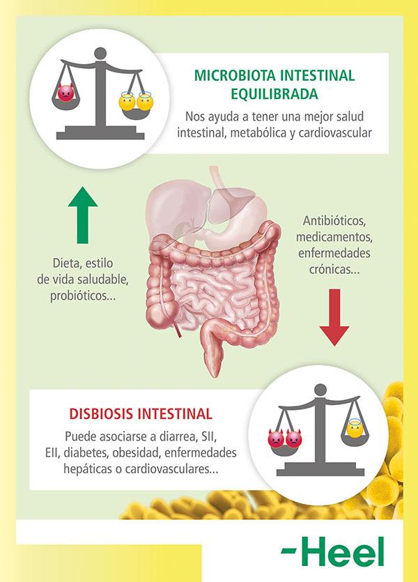 Problemas de tener la flora intestinal dañada - HeelProbiotics - HeelEspaña