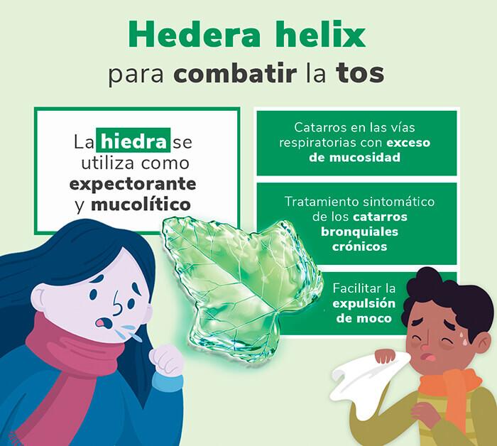 Hedera helix expectorante natural para la tos con flema: hedera helix combatir tos heelespana - HeelEspaña