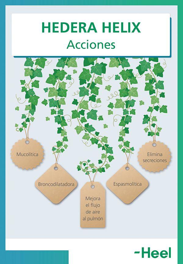 ¿Qué beneficios tiene la hiedra para la tos? - HeelEspaña