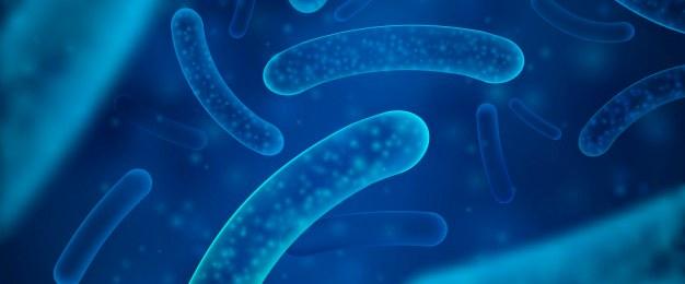 Pautas para mantener una flora vaginal sana: lactobaciolos bacterias flora intestinal - HeelEspaña