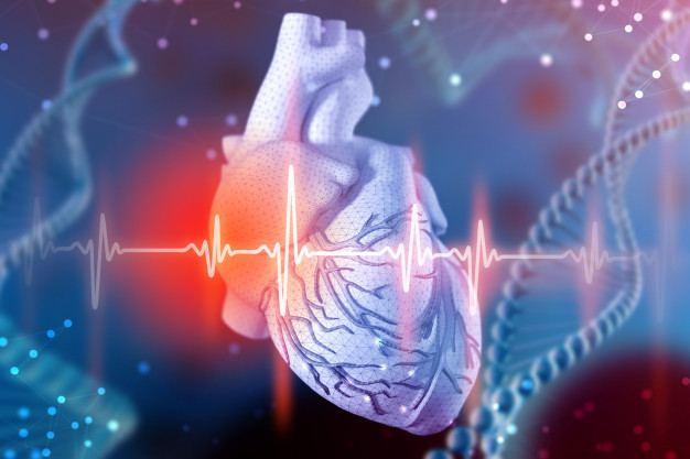 El sedentarismo favorece el riesgo cardiovascular: corazon cardiograma - HeelEspaña