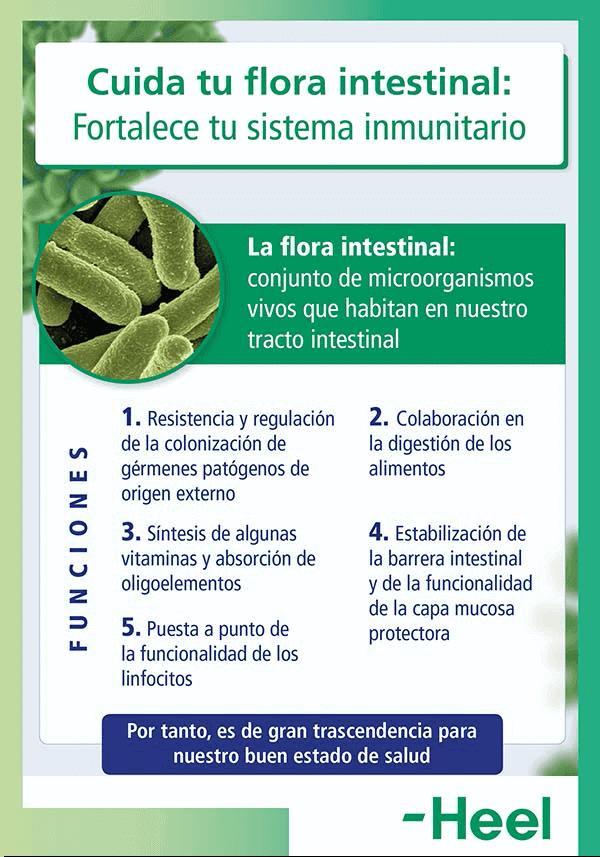 La importancia de la flora intestinal: cuidado flora intestinal heelespana - HeelEspaña