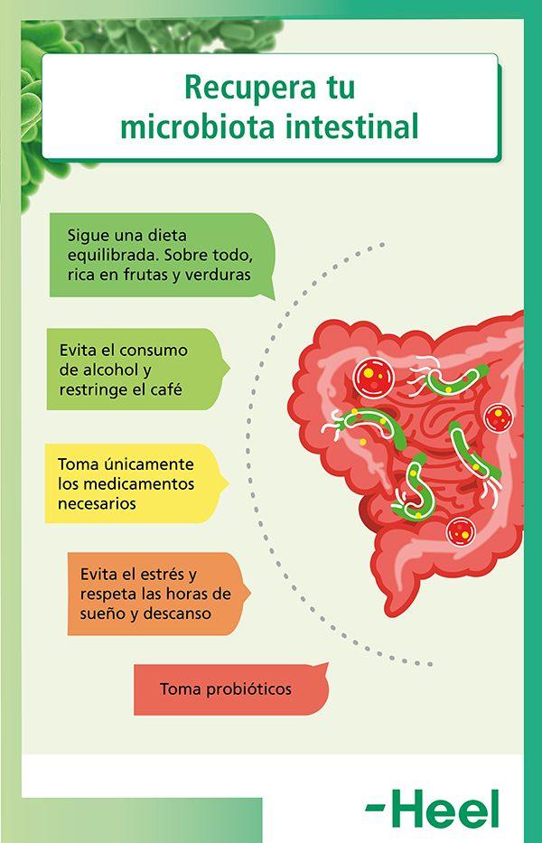 Hábitos saludables: cómo recuperar la flora intestinal - HeelProbiotics - HeelEspaña