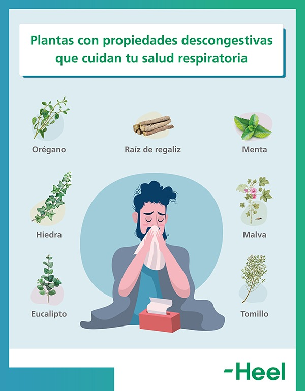 Alivio natural con plantas para la la congestión nasal por sinusitis