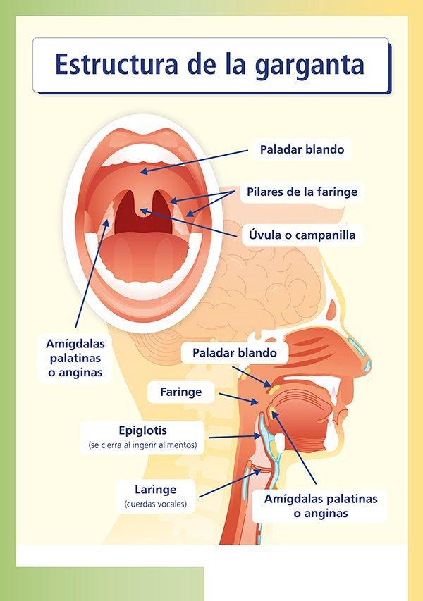 Infecciones: garganta irritada y mocos