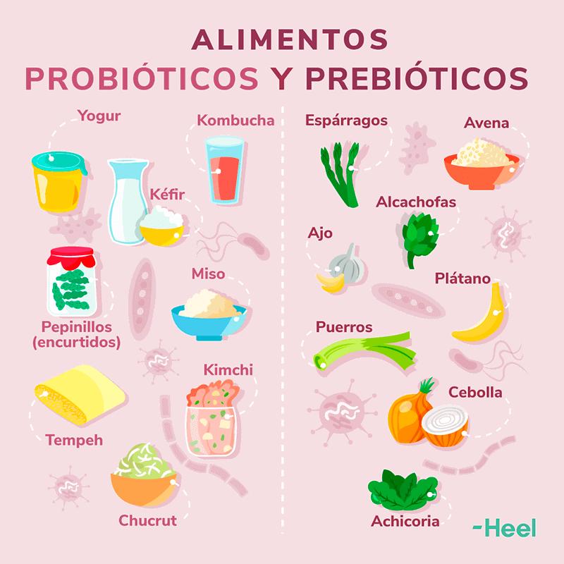 Los prebióticos, los probióticos y la alimentación