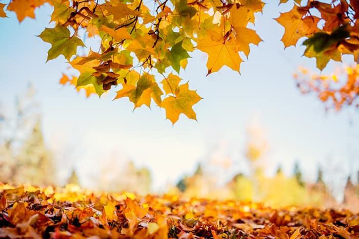 Los factores que provocan reacciones alérgicas en otoño