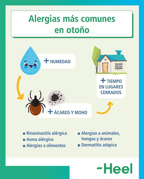 Principales reacciones alérgicas en otoño